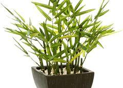 plante artificielle toilette