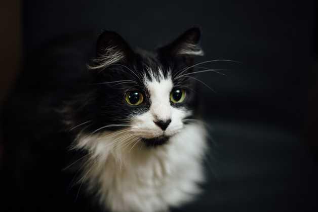 Cat Burglar - bp coyle