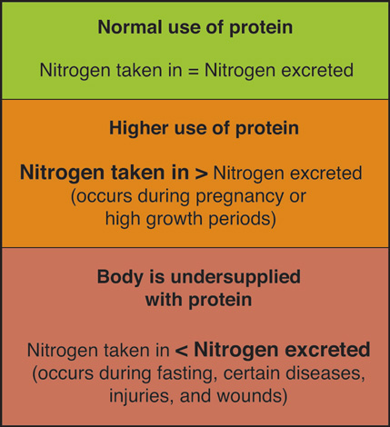 Proteins Diet And Personal Choices