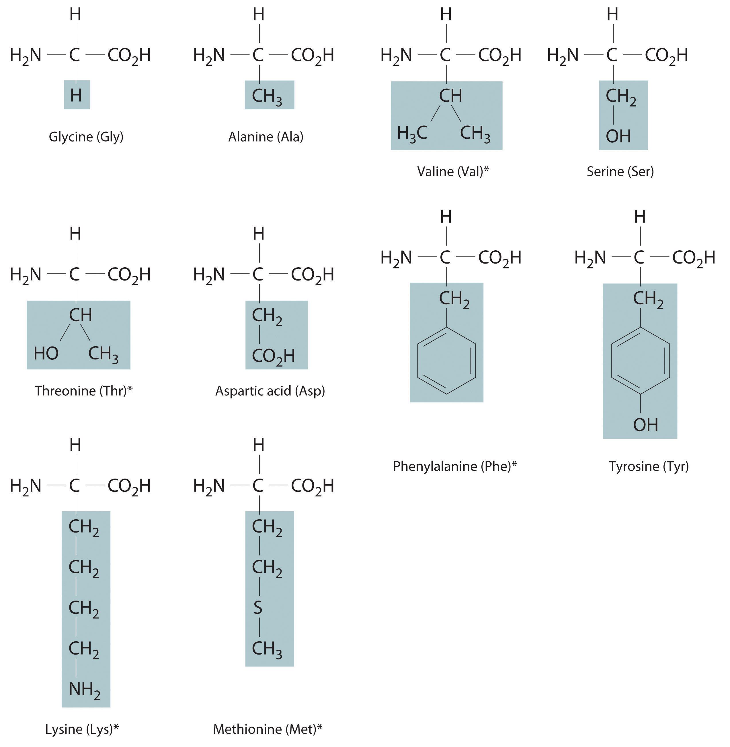 Thermochemistry And Nutrition