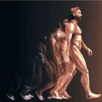 ¿POR QUÉ EL HOMO SAPIENS SAPIENS EVOLUCIONÓ TAN RÁPIDO? CRONOLOGÍA