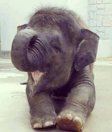 Elefantito tierno