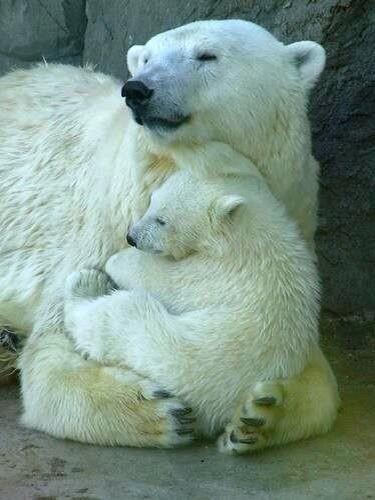 Osa polar con su pequeño