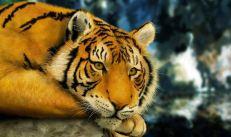 Tigre tranquilo Muy Interesante México