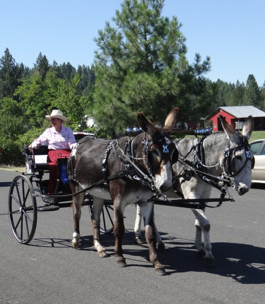 Elk City Wagon Road Parade (4/4)