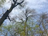 Impressionen von der Waldwanderung 2018; Nester der Graureiher; Foto: M. Geißler