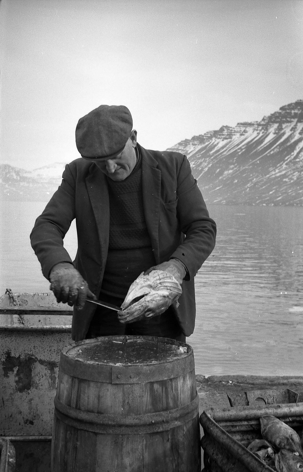 Anton Lundberg í Neskaupstað að skera gellu úr þorskhaus.