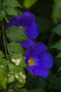 Rigoberto Flower