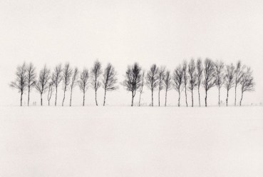 twenty-four-trees-abashiri-hokkaido-japan-by-michael-kenna-2005