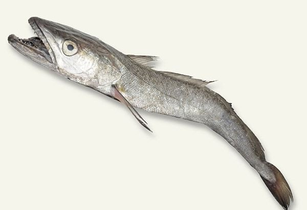 【悲報】白身魚のフライの正体、メッサーラとかいう謎の魚だった…