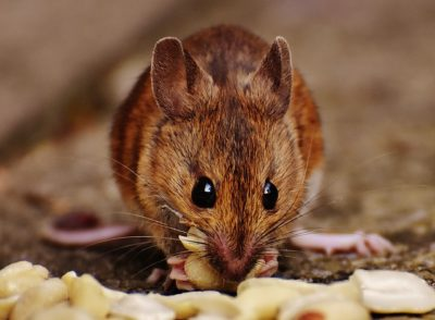How To Mouse-Proof Your Home For Winter