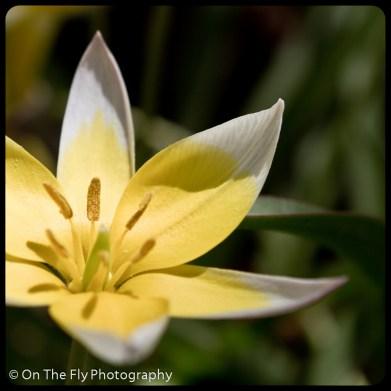 flowers-902
