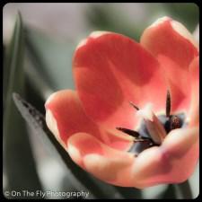 flowers-904