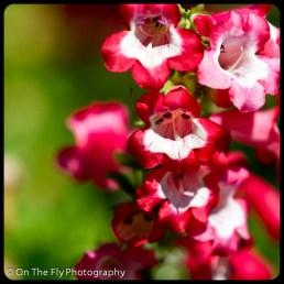 flowers-906