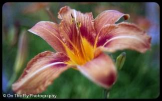 flowers-924