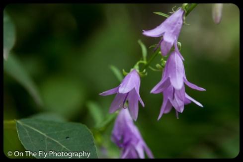 2015-07-21-0499-Flowers