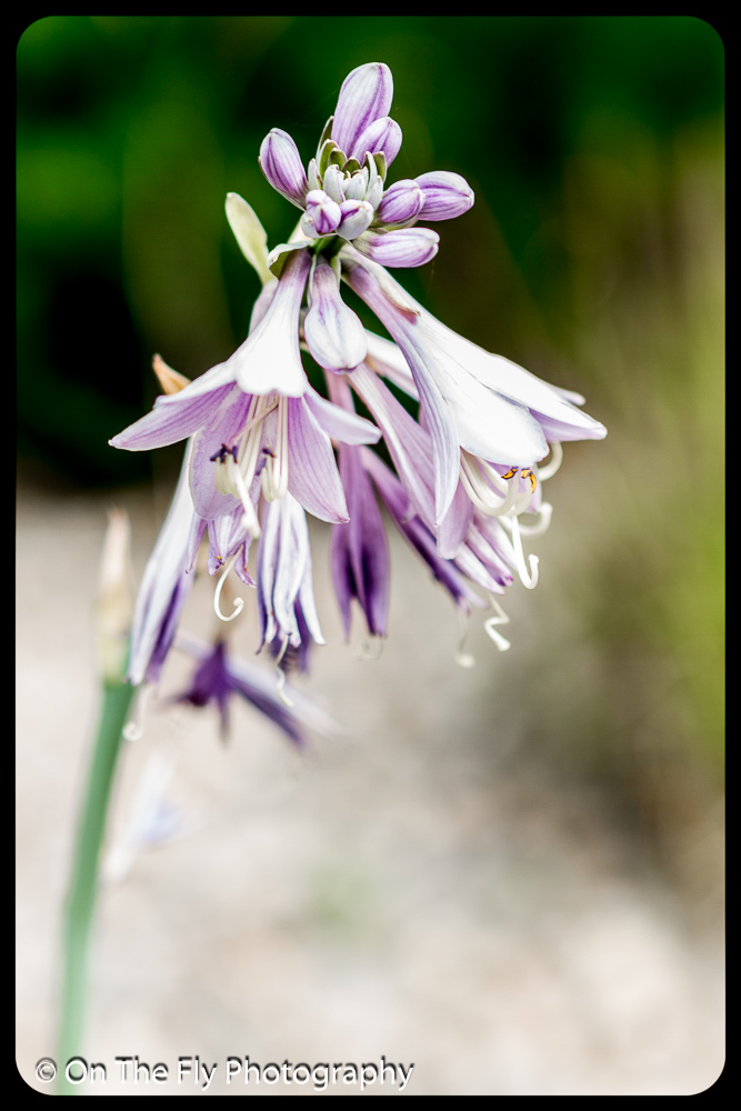 2015-07-21-0508-Flowers
