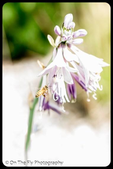 2015-07-21-0511-Flowers
