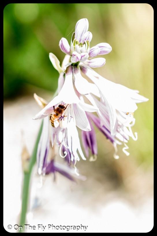 2015-07-21-0512-Flowers