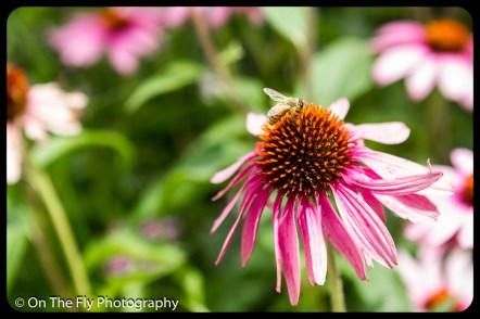 2015-07-21-0518-Flowers