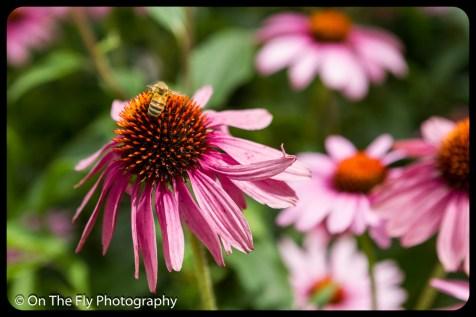 2015-07-21-0519-Flowers
