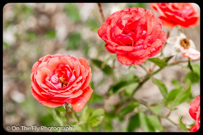 2015-07-21-0523-Flowers