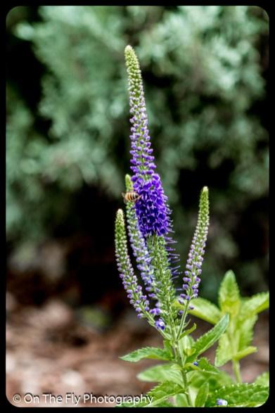 2015-07-21-0532-Flowers