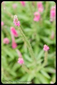 2015-07-21-0540-Flowers