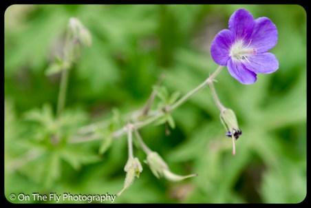 2015-07-21-0555-Flowers