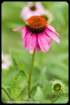 2015-07-21-0559-Flowers
