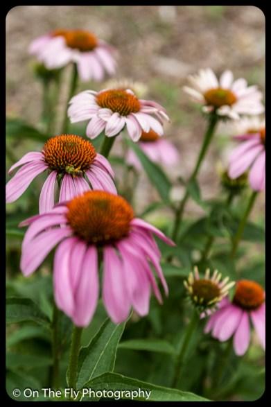 2015-07-21-0569-Flowers