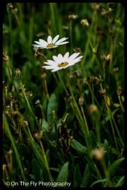 2015-07-21-0578-Flowers