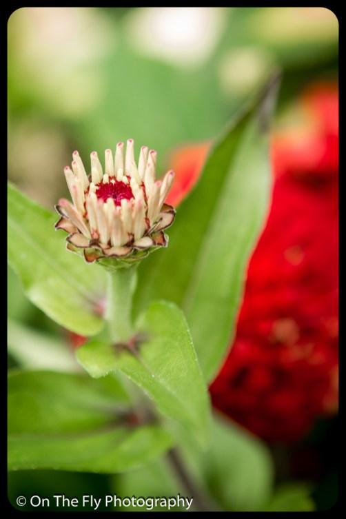 2015-07-21-0591-Flowers