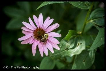 2015-08-02-0002-Flowers