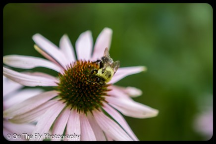 2015-08-02-0013-Flowers