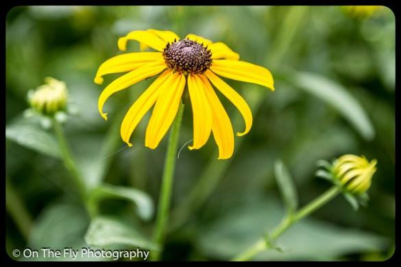 2015-08-02-0030-Flowers