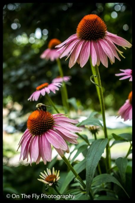 2015-08-02-0048-Flowers
