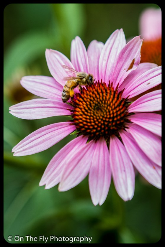2015-08-02-0049-Flowers