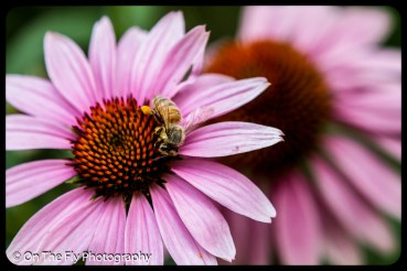 2015-08-02-0051-Flowers