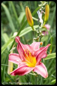 2015-08-02-0055-Flowers