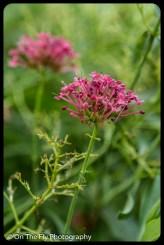 2015-08-02-0058-Flowers