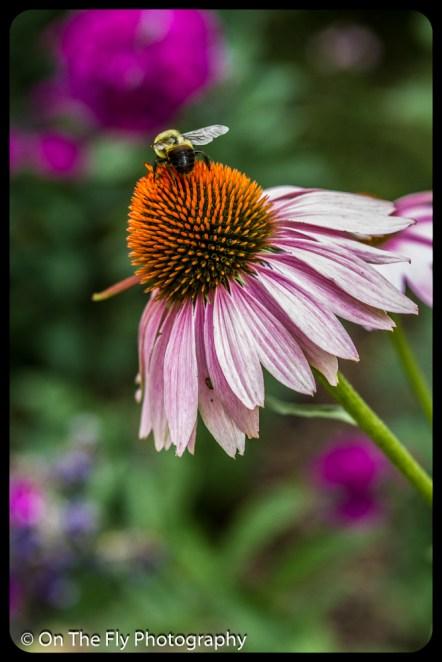 2015-08-02-0060-Flowers
