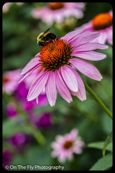 2015-08-02-0074-Flowers
