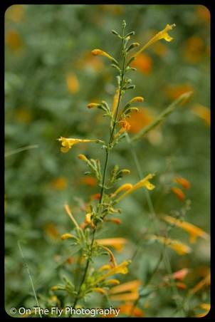 2015-08-02-0084-Flowers
