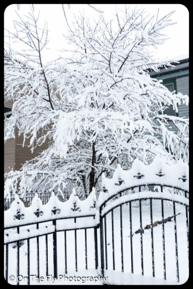 LD-Gerald-Snow-0011-2020-04-16