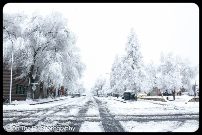 LD-Gerald-Snow-0014-2020-04-16