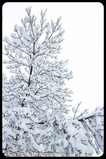 LD-Gerald-Snow-0015-2020-04-16