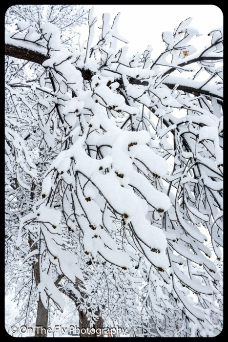 LD-Gerald-Snow-0016-2020-04-16
