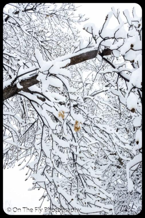 LD-Gerald-Snow-0017-2020-04-16