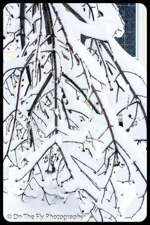 LD-Gerald-Snow-0019-2020-04-16